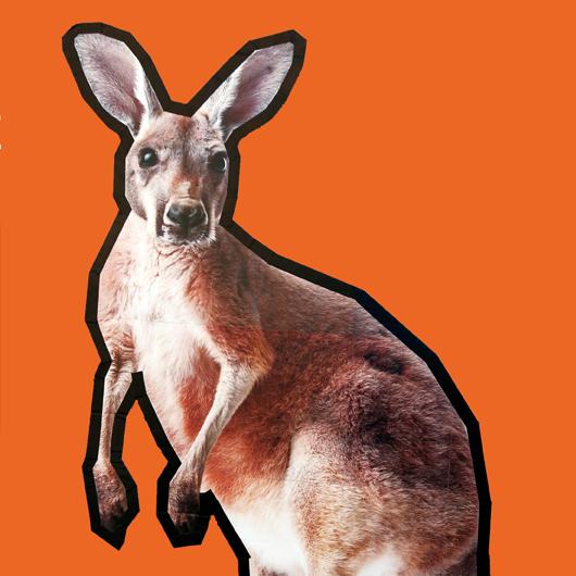 känguru 1 mai halle